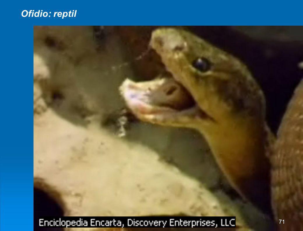 Ofidio: reptil