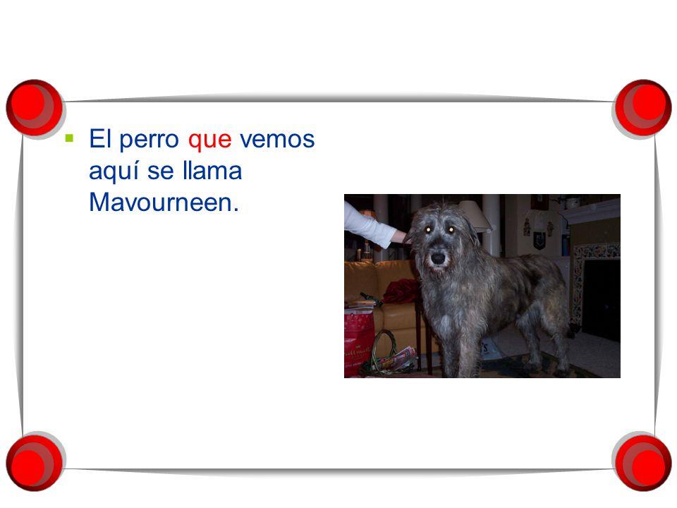El perro que vemos aquí se llama Mavourneen.