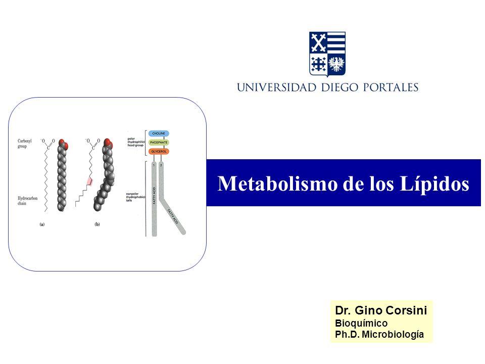 Metabolismo de los Lípidos