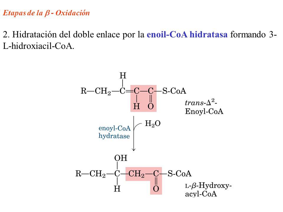 Etapas de la  - Oxidación