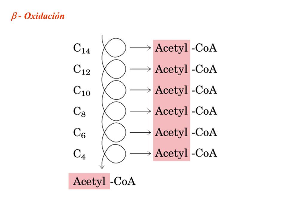  - Oxidación