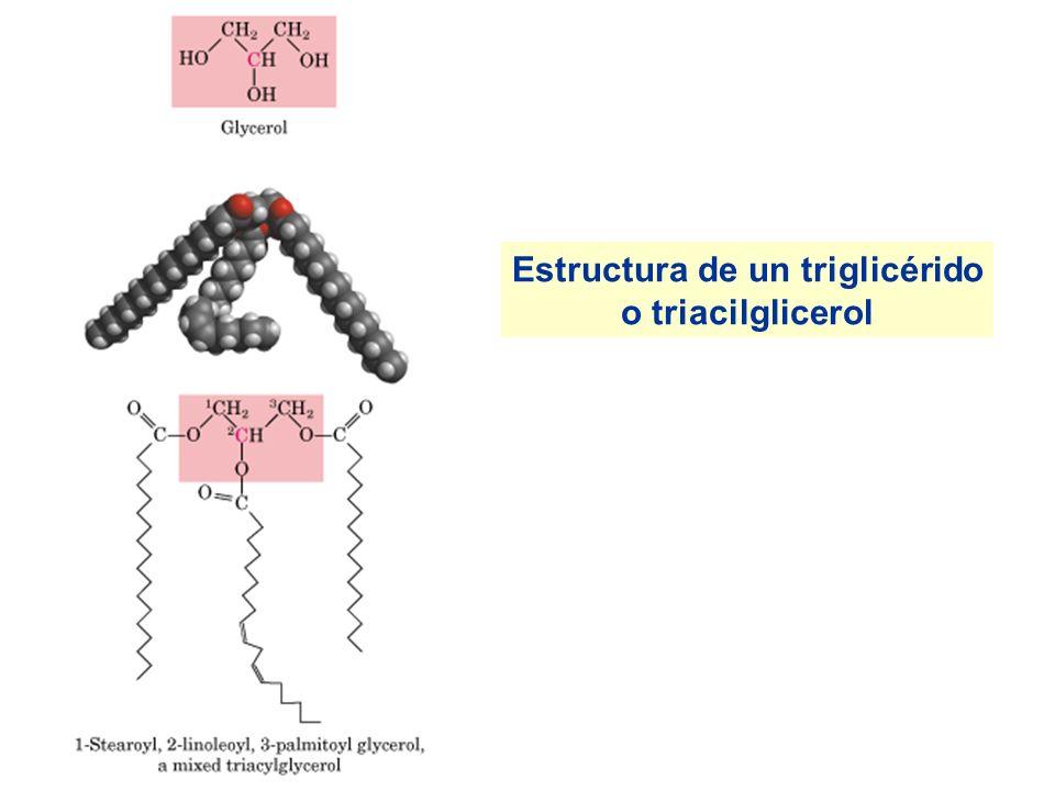 Estructura de un triglicérido o triacilglicerol