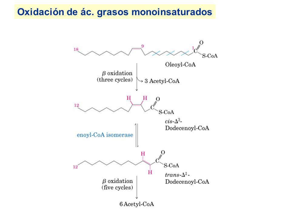 Oxidación de ác. grasos monoinsaturados