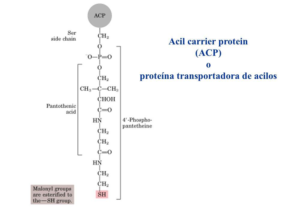 proteína transportadora de acilos