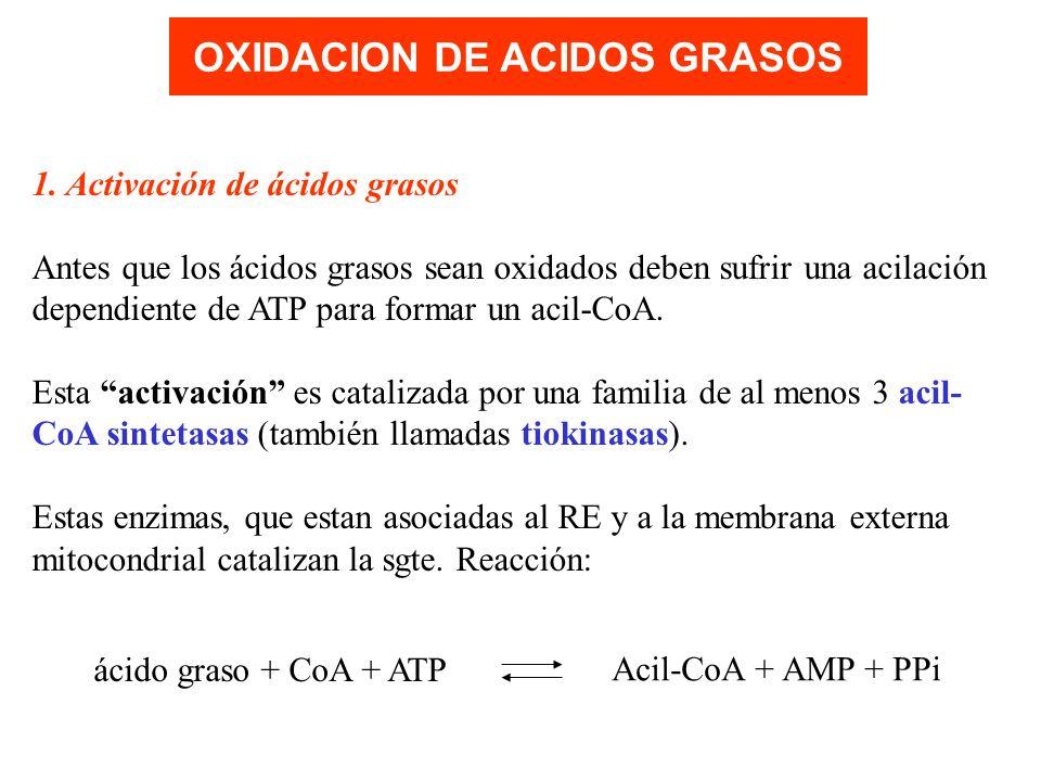 OXIDACION DE ACIDOS GRASOS
