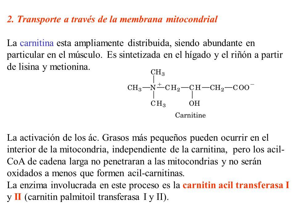 2. Transporte a través de la membrana mitocondrial