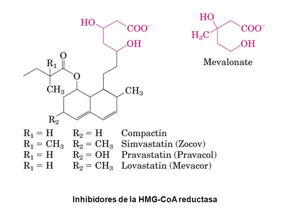 Inhibidores de la HMG-CoA reductasa