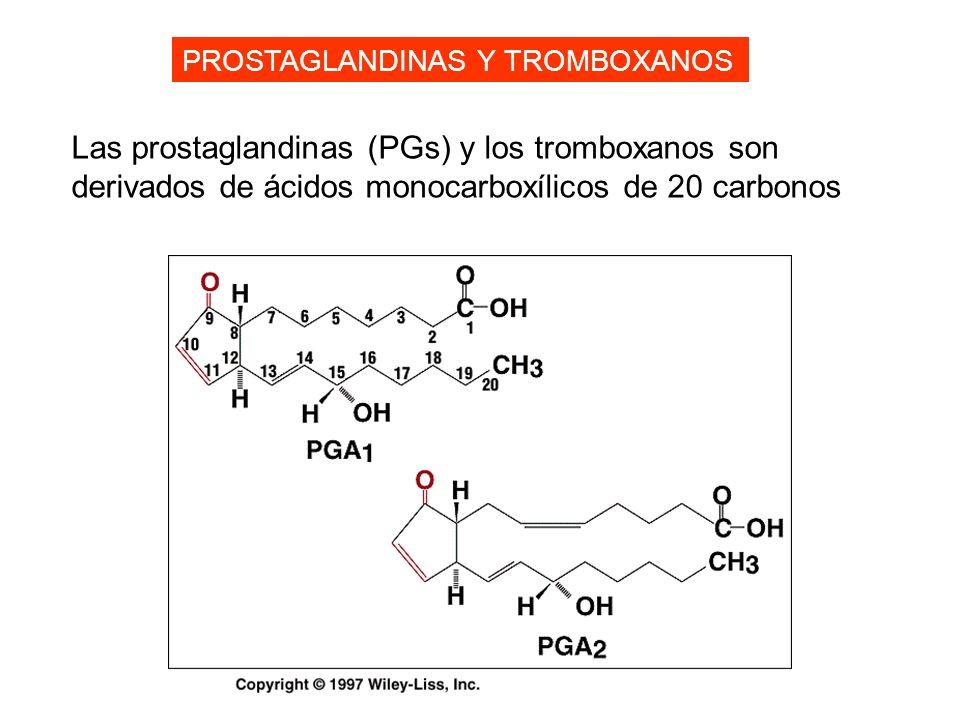 PROSTAGLANDINAS Y TROMBOXANOS