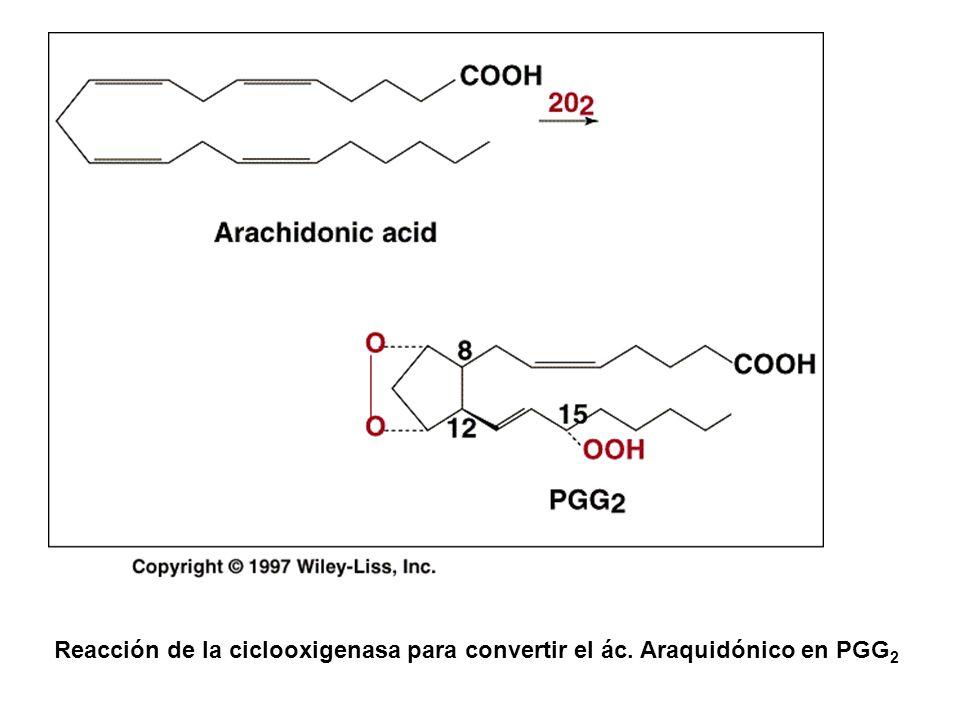 Reacción de la ciclooxigenasa para convertir el ác