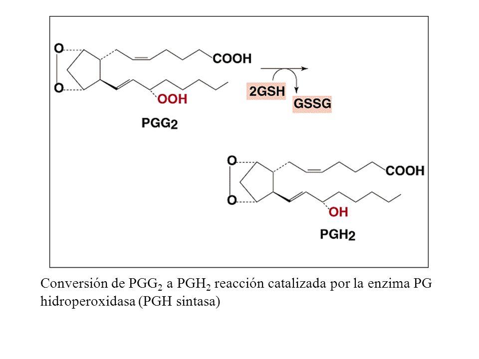 Conversión de PGG2 a PGH2 reacción catalizada por la enzima PG hidroperoxidasa (PGH sintasa)