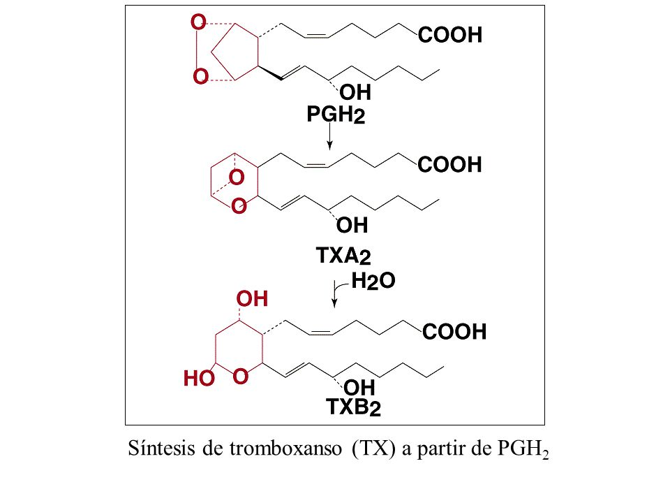 Síntesis de tromboxanso (TX) a partir de PGH2