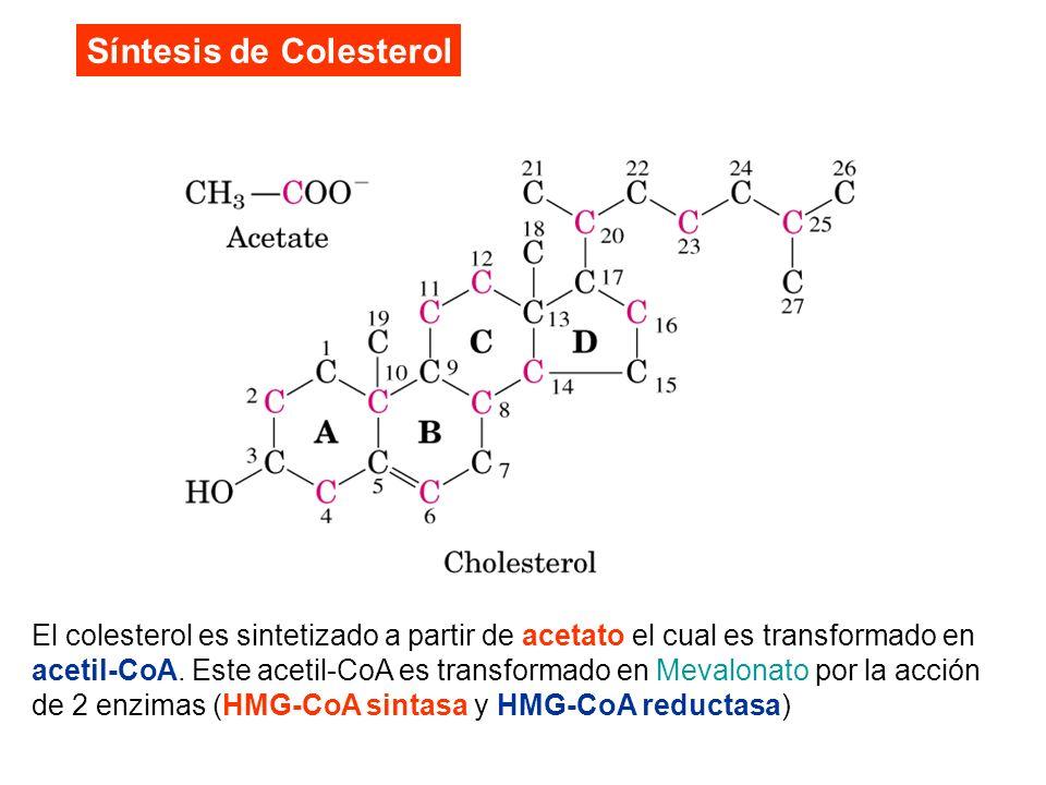 Síntesis de Colesterol