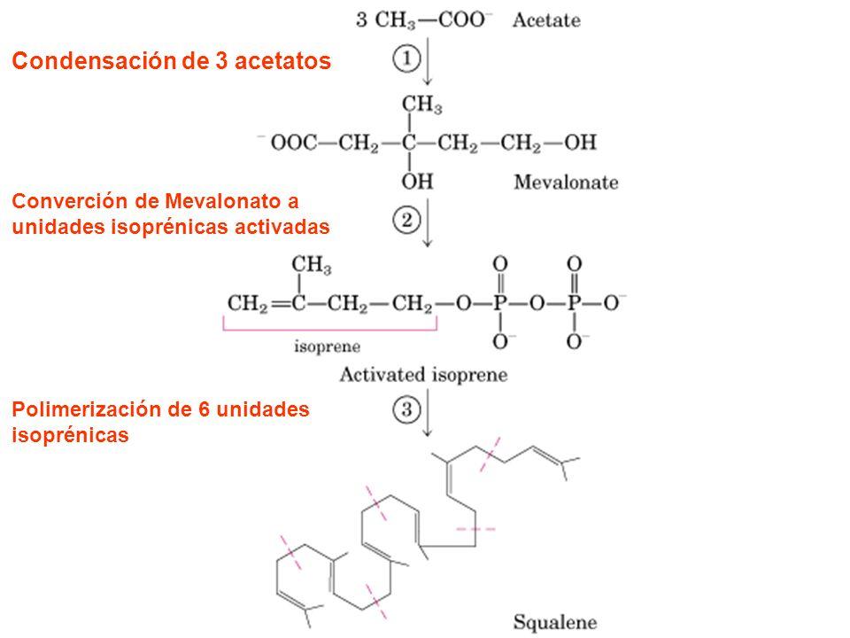 Condensación de 3 acetatos