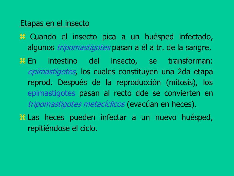 Las heces pueden infectar a un nuevo huésped, repitiéndose el ciclo.