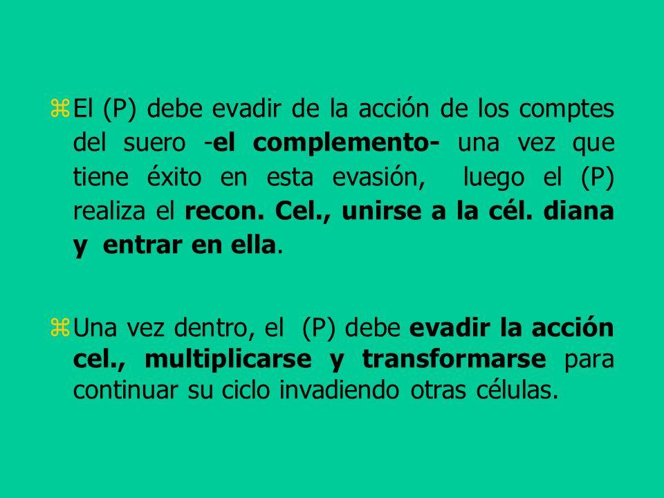 El (P) debe evadir de la acción de los comptes del suero -el complemento- una vez que tiene éxito en esta evasión, luego el (P) realiza el recon. Cel., unirse a la cél. diana y entrar en ella.