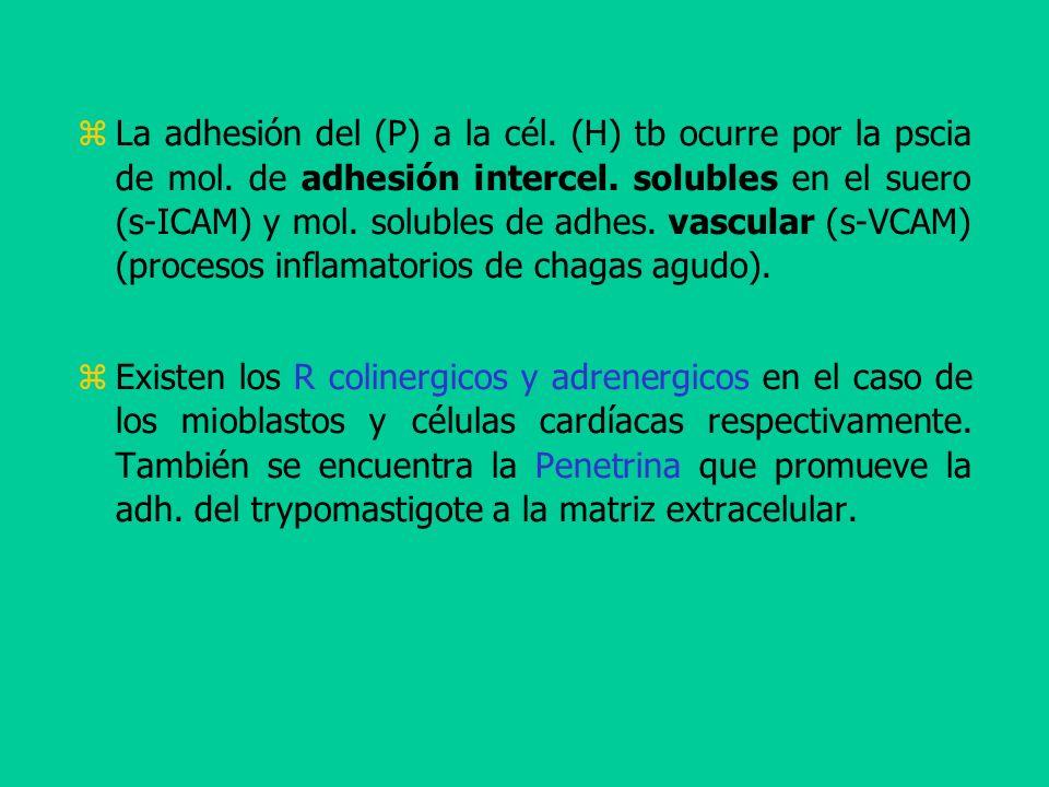 La adhesión del (P) a la cél. (H) tb ocurre por la pscia de mol