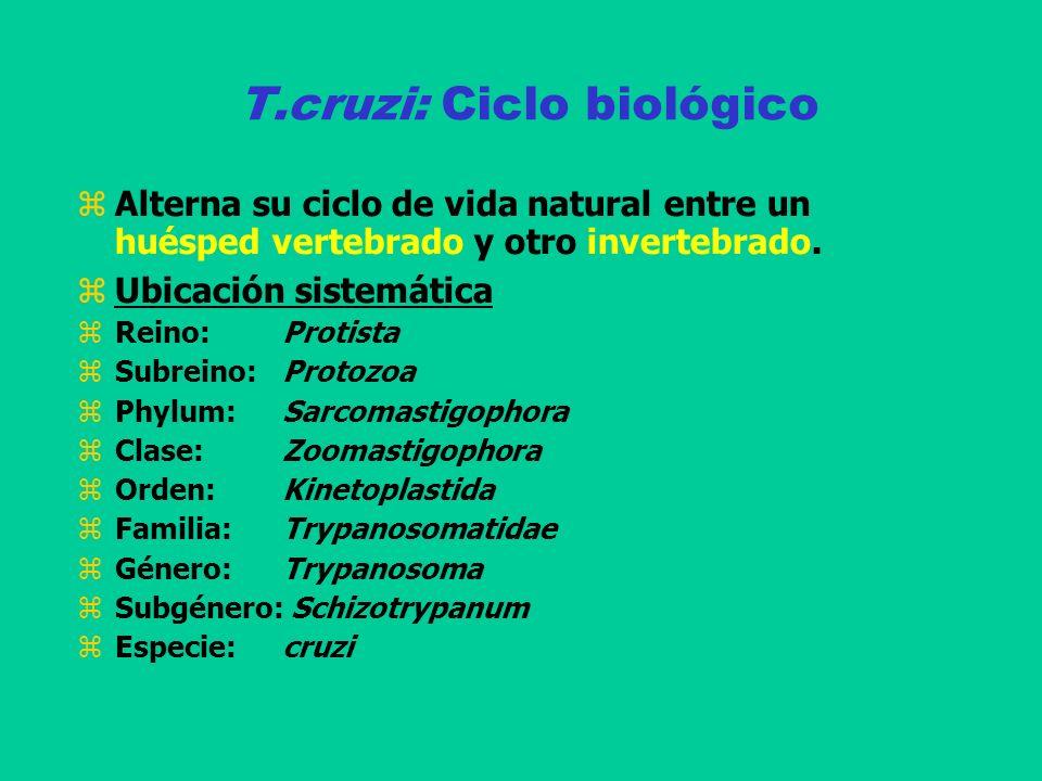 T.cruzi: Ciclo biológico