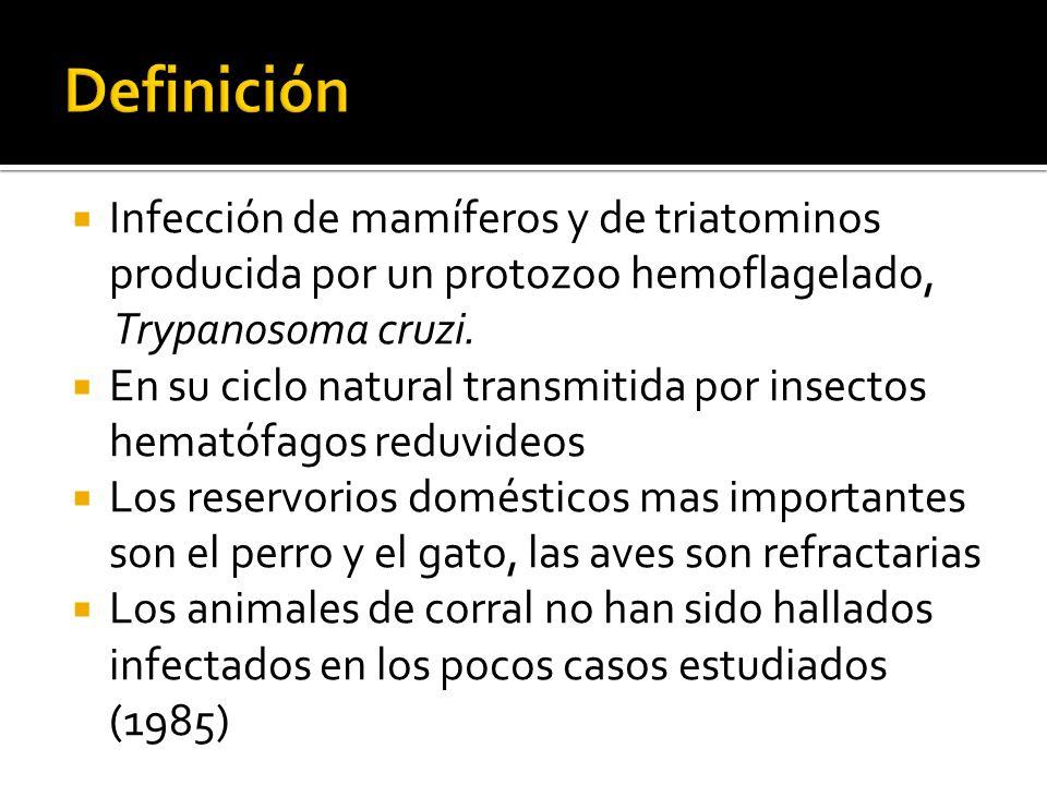 Definición Infección de mamíferos y de triatominos producida por un protozoo hemoflagelado, Trypanosoma cruzi.