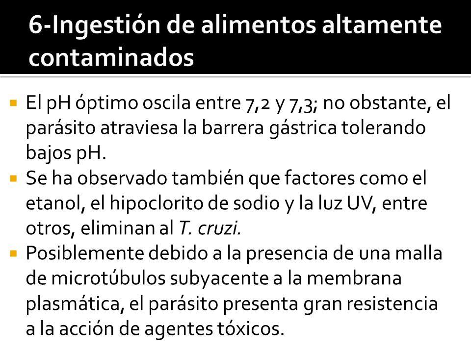 6-Ingestión de alimentos altamente contaminados