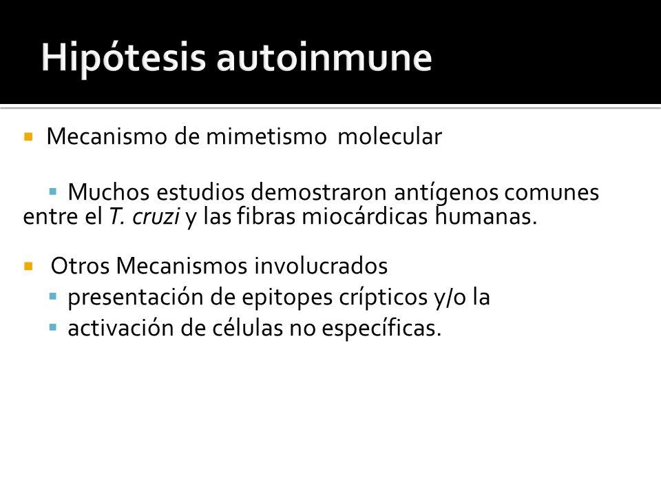 Hipótesis autoinmune Mecanismo de mimetismo molecular