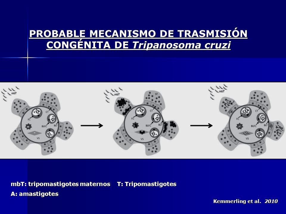 PROBABLE MECANISMO DE TRASMISIÓN CONGÉNITA DE Tripanosoma cruzi