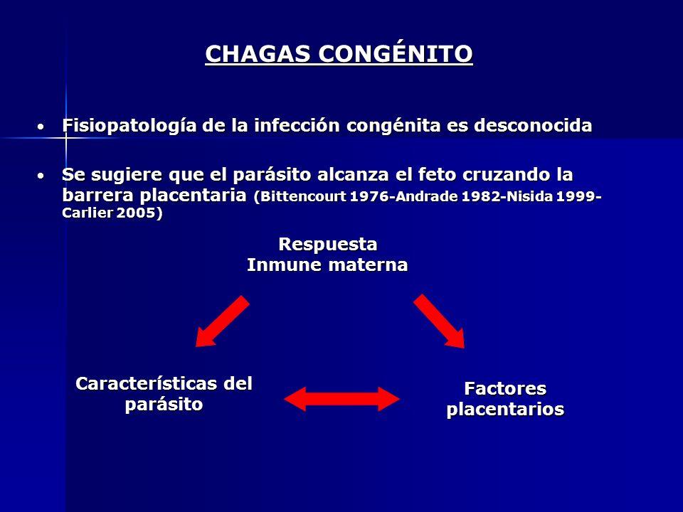 CHAGAS CONGÉNITO Fisiopatología de la infección congénita es desconocida.