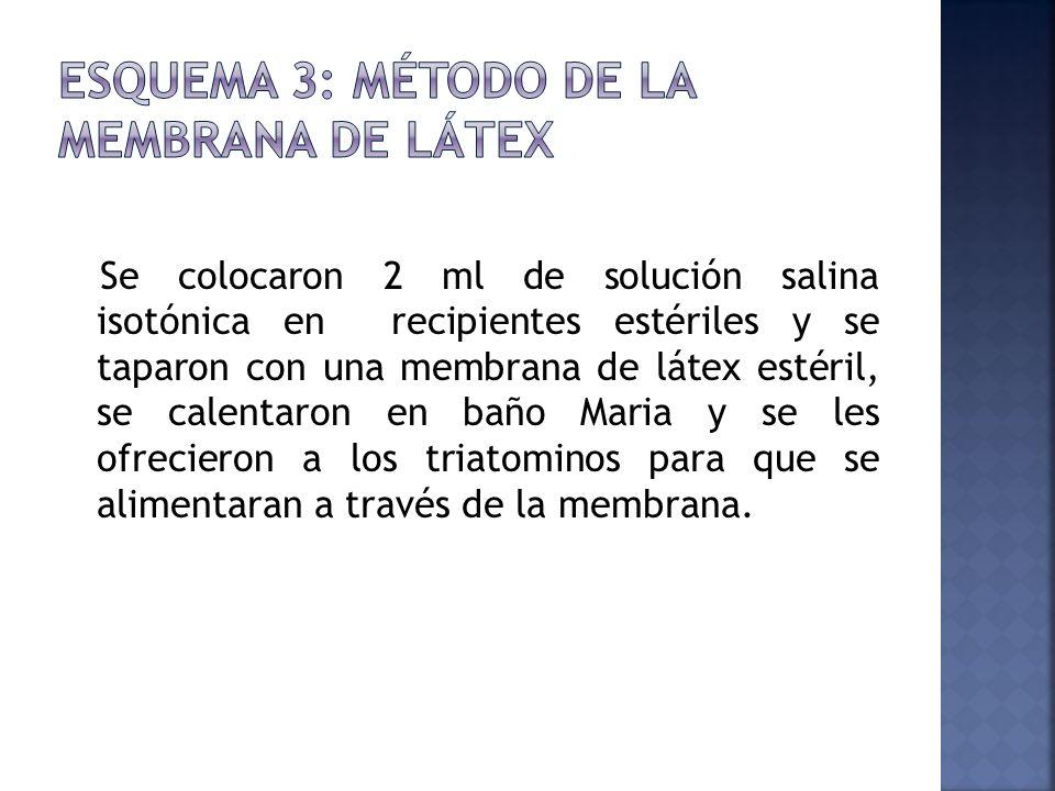 Esquema 3: Método de la Membrana de Látex