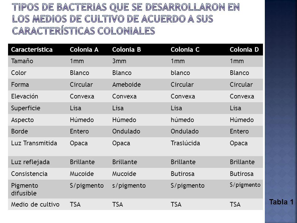 tipos de bacterias que se desarrollaron en los medios de cultivo de acuerdo a sus características coloniales