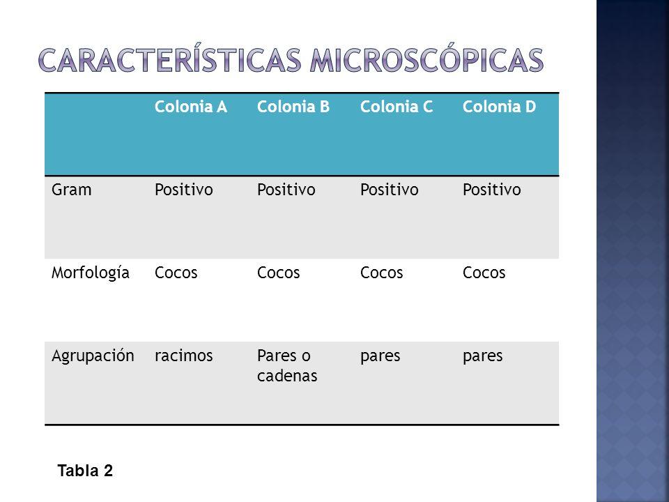 Características microscópicas