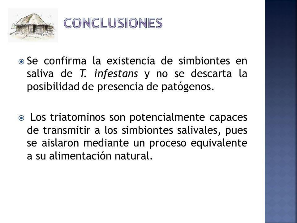 Conclusiones Se confirma la existencia de simbiontes en saliva de T. infestans y no se descarta la posibilidad de presencia de patógenos.
