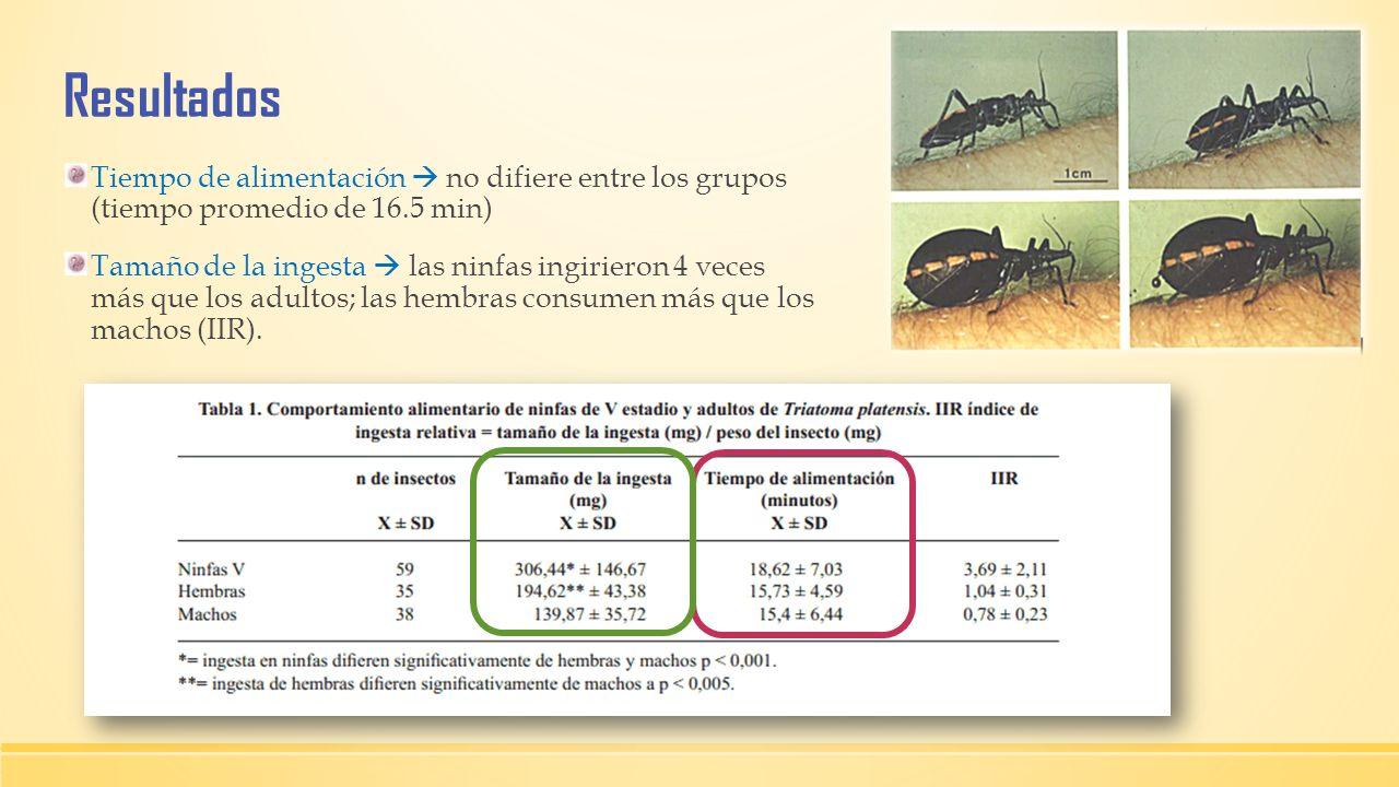 ResultadosTiempo de alimentación  no difiere entre los grupos (tiempo promedio de 16.5 min)