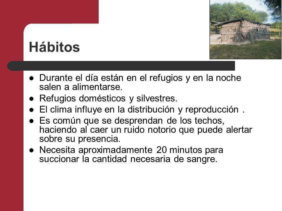 Hábitos Durante el día están en el refugios y en la noche salen a alimentarse. Refugios domésticos y silvestres.