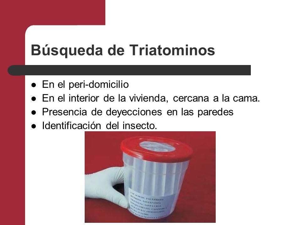 Búsqueda de Triatominos