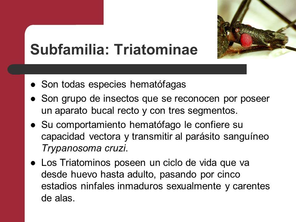 Subfamilia: Triatominae