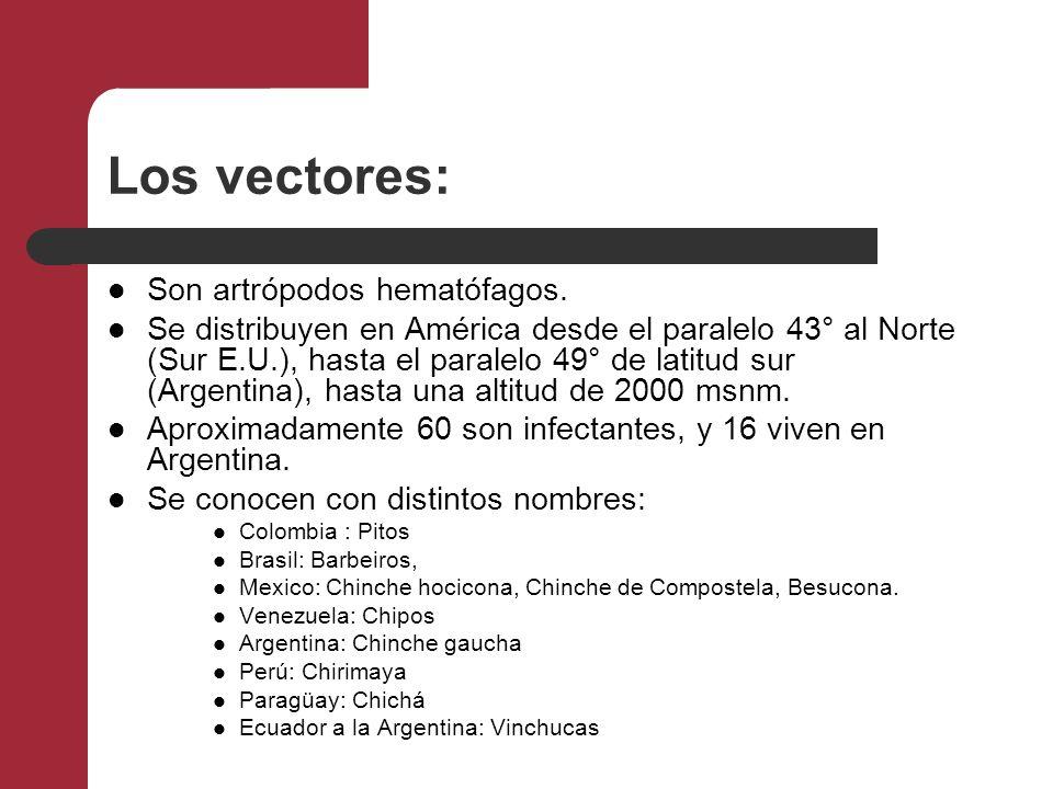 Los vectores: Son artrópodos hematófagos.