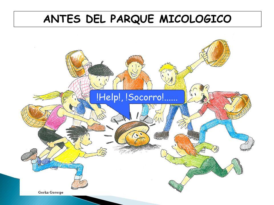 ANTES DEL PARQUE MICOLOGICO