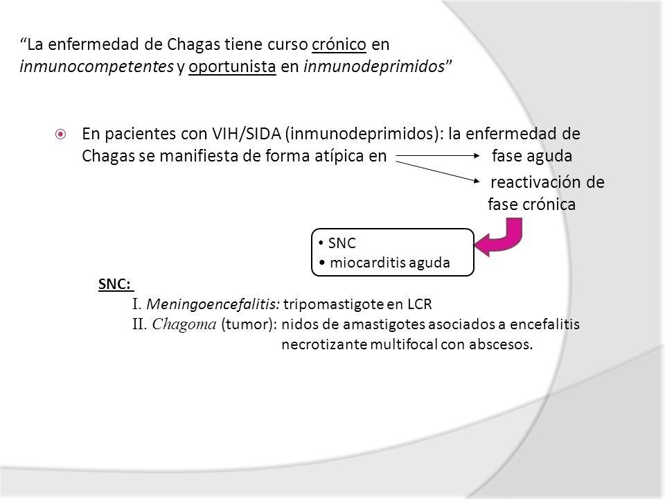 reactivación de fase crónica