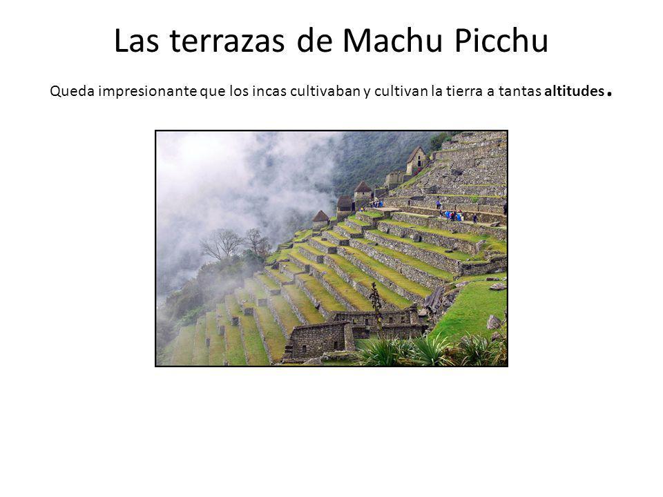 Las terrazas de Machu Picchu Queda impresionante que los incas cultivaban y cultivan la tierra a tantas altitudes.