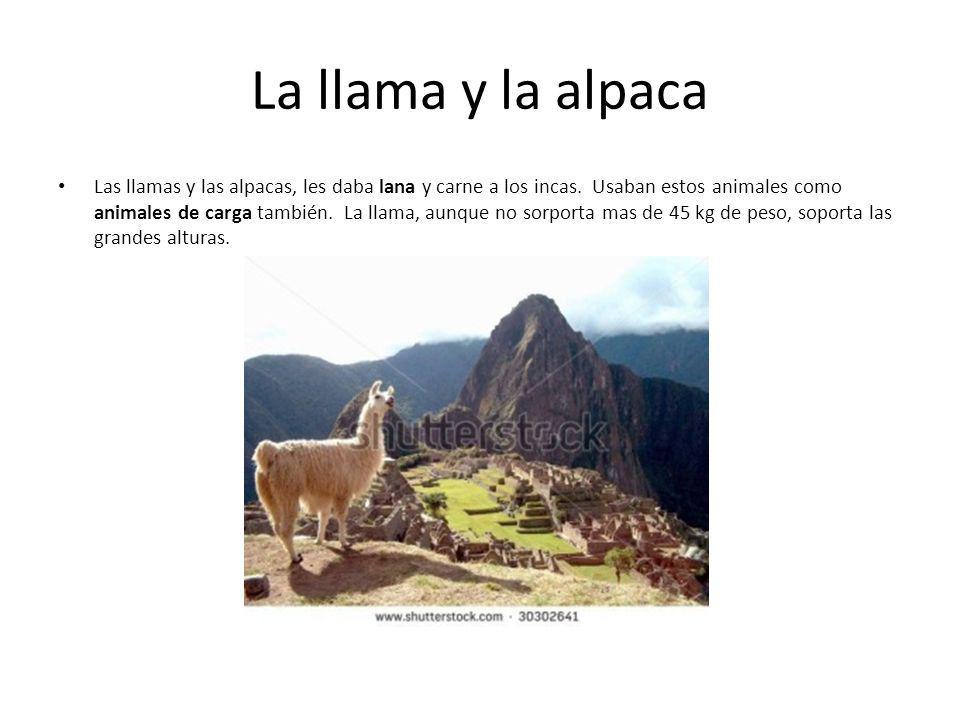 La llama y la alpaca
