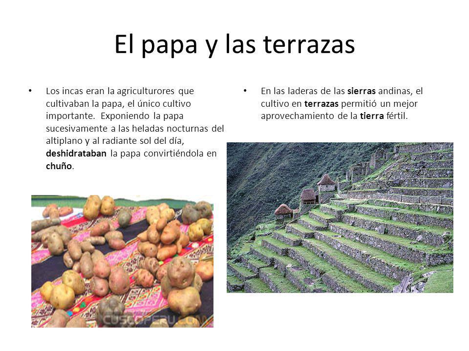 El papa y las terrazas
