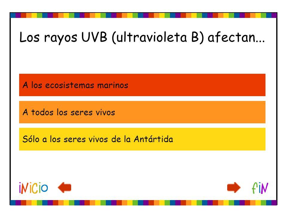 Los rayos UVB (ultravioleta B) afectan...