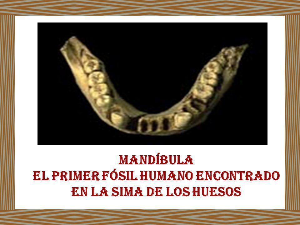 El primer fósil humano encontrado en la sima de los huesos