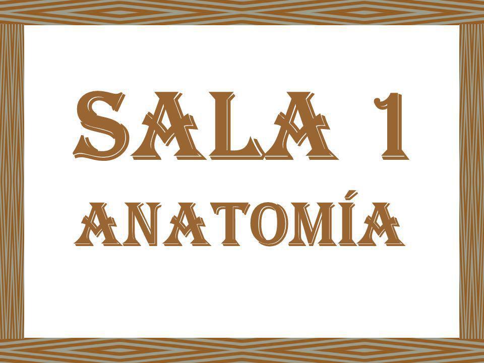 SALA 1 ANATOMÍA
