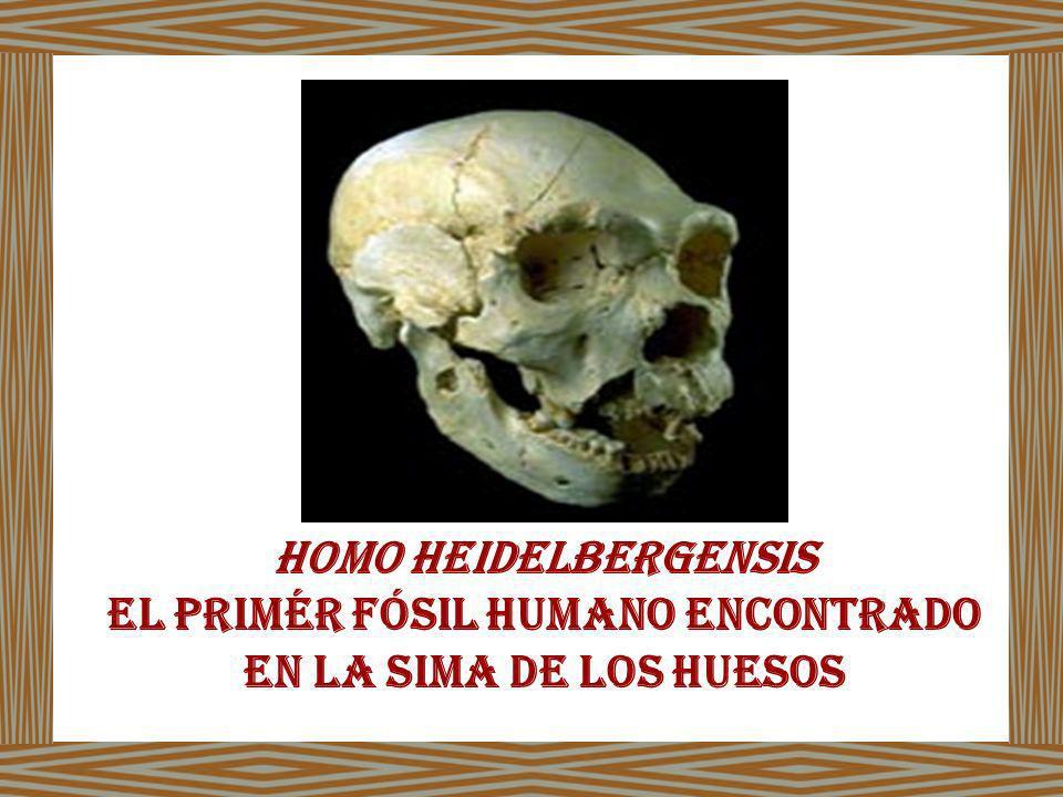 El primér fósil humano encontrado en la sima de los huesos