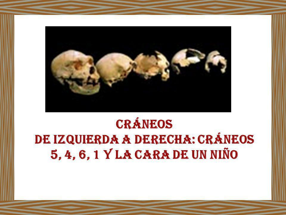 De izquierda a derecha: Cráneos 5, 4, 6, 1 y la cara de un niño