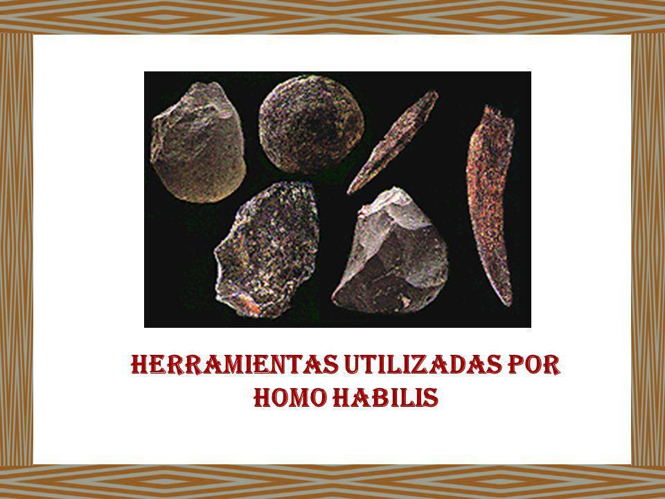 Herramientas utilizadas por homo haBilis