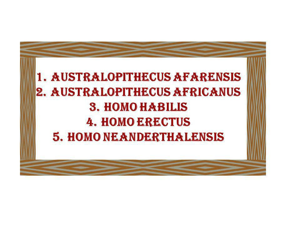 AUSTRALOPITHECUS AFARENSIS AUSTRALOPITHECUS AFRICANUS HOMO HABILIS