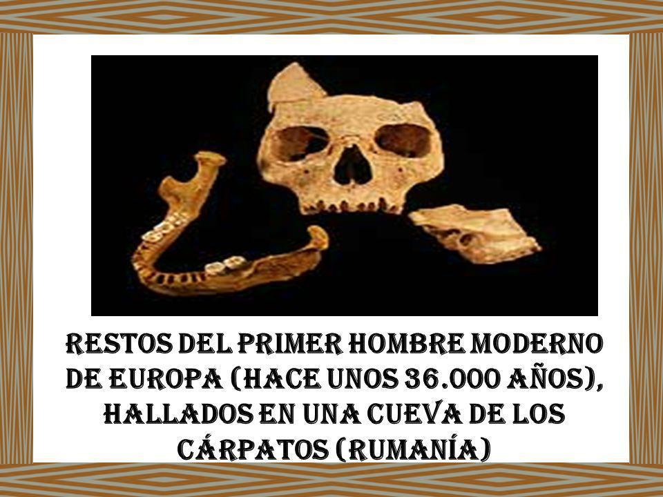 Restos del primer hombre moderno de Europa (hace unos 36