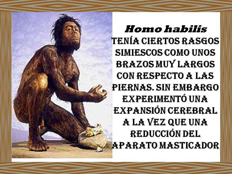 Homo habilis tenía ciertos rasgos simiescos como unos brazos muy largos con respecto a las piernas.