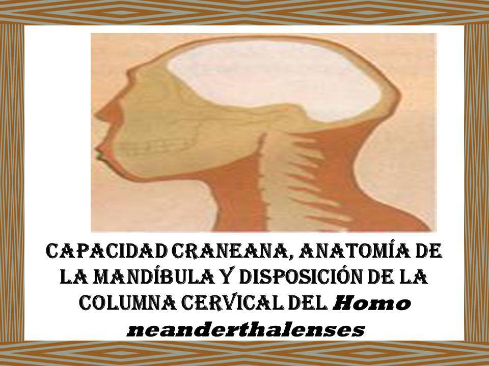 Capacidad Craneana, Anatomía de la Mandíbula y Disposición de La Columna Cervical del Homo neanderthalenses